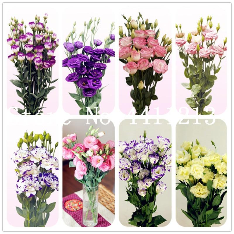 Big promotion! 200 Pcs Eustoma Bonsai Perennial Flowering Plants Lisianthus Multicolor for DIY Home & Garden Indoor Bonsai