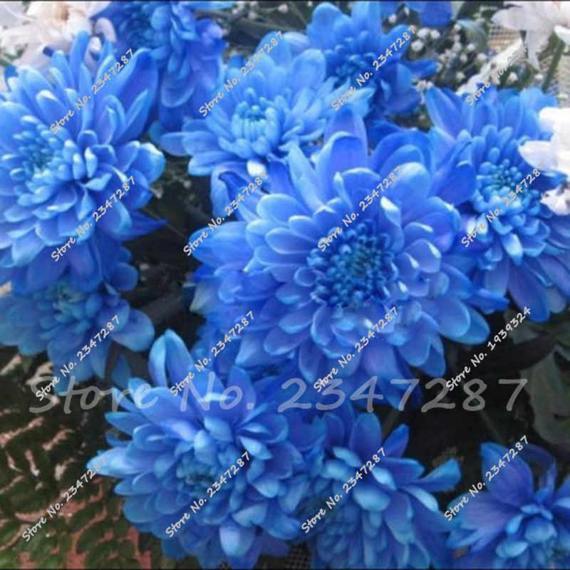 120 шт синий Далия бонсай красивые сады Далия пинната Бонсай завод бонсай цветок бонсай многолетний Бесплатная доставка