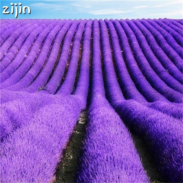 100 piezas de flor de lavanda italiana encantadora flor fragante planta en maceta de crecimiento rápido decoración de jardín al aire libre