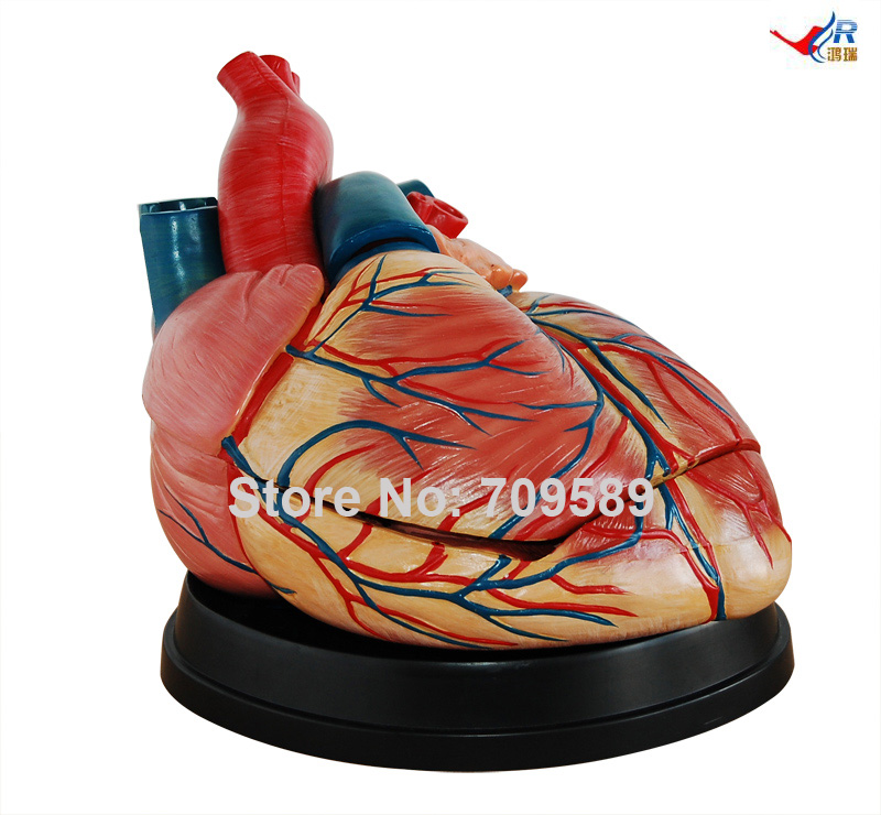 New Style Jumbo Heart Model