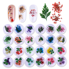 1 Box Colorful Real Nail Dried Flower Clover Leaf Preserved Flower 3D Manicure Nail Art Decoration