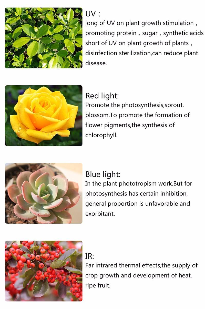 Full Spectrum LED Plant Grow Lights 56