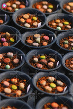 2pcs Mixed Lithops Succulent Bulbs Real Color Indoor Bonsai Flower Plants Pot for home garden Best packaging 100% live NOT SEEDS