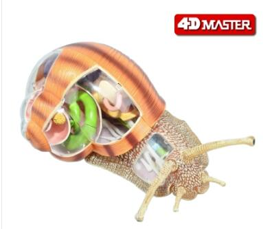4D Master snail specimen anatomy model biology course teaching AIDS robin hood 4d xxray master mighty jaxx jason freeny anatomy cartoon ornament