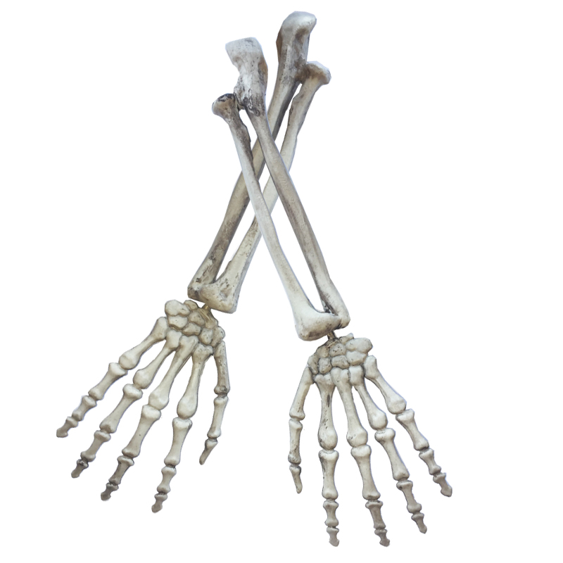 skeleton arms4