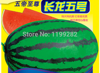 Promotion!!! Precocious big fruit type - Changlong V - Watermelon Seeds sweet melon fruit seeds * Free Shipping