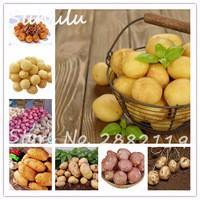 100seeds-bag-Mini-Giant-Purple-Potato-Seeds-Organic-Delicious-Sweet-Anti-Wrinkle-Nutrition-Green-Vegetable-Seeds.jpg_200x200