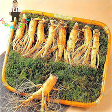 10pcs Chinese Ginseng Seeds Rare Heirloom Herbal Seed Home Garden Flower Diy Plant Sementes , Grow Your Own Ginseng Roots