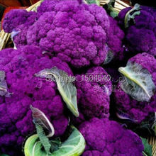 100 nutritious Purple Cauliflower  Seeds -LOW CARB!     rich in Anthocyanin
