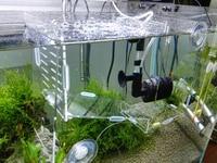 removable acrylic betta isolation box hatchery for aquarium fish tank with sponge filter