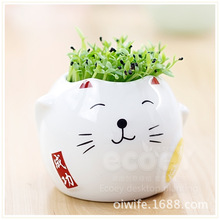 Strange new computer peripheral radiation Lucky Cat plant planting customized gifts succulents potted flowers