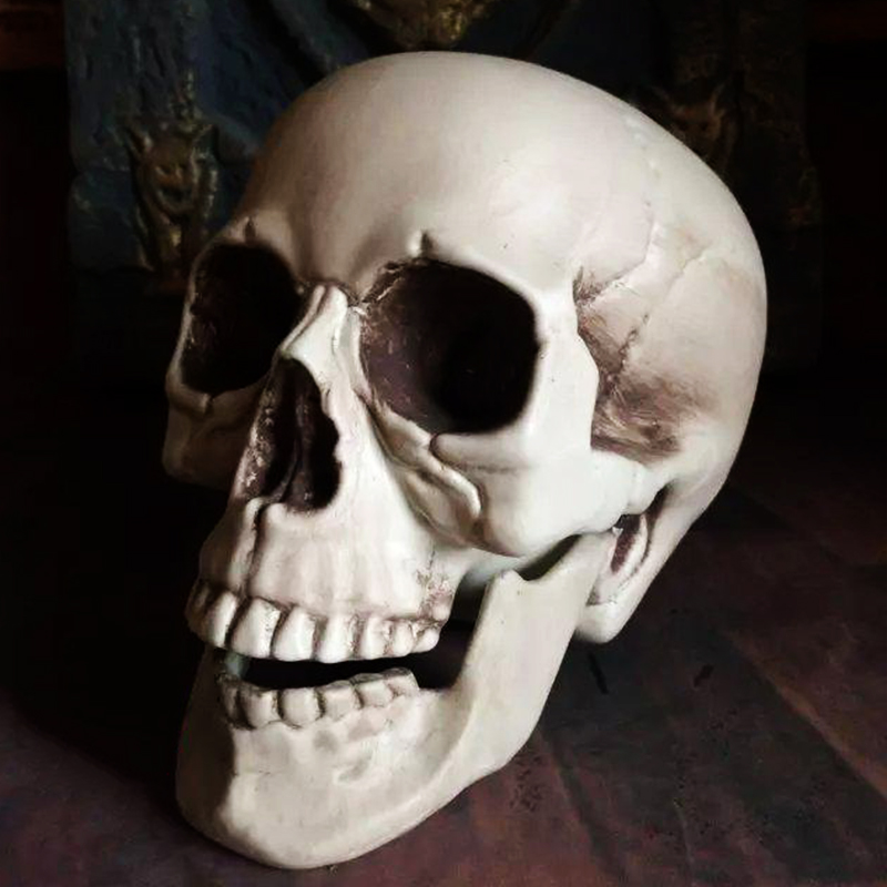 aliexpresscom buy plastic skeleton head halloween decor prop human skull decoration bones statue horror tamper toys bar ghost house art props from - Halloween Skeleton Head