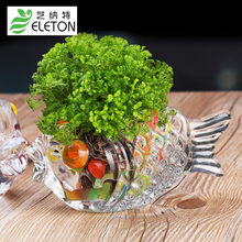 ELETON crystal clear glass vase Home Furnishing goldfish grass green flower pot hydroponics coins lucky decoration Office