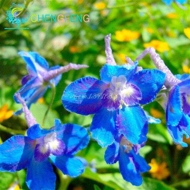 Il trasporto Libero 30 pz/borsa Misto Colourful Del Fiore bonsai Delphinium bonsasi Giappone Bella Gigante Camera Giardino di Fiori Hardy Plantas