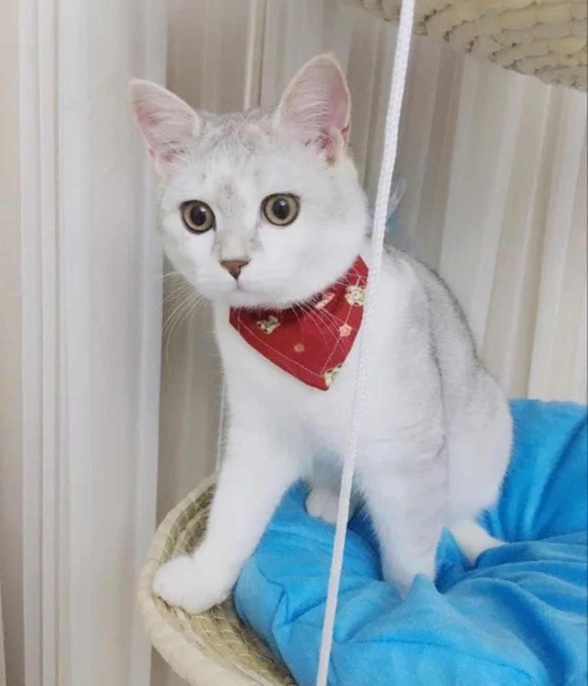 Ручная вязка круглая коляска для кота соломенная и хлопковая ткань кошка подвесные кровати домашнее животное солнечное сиденье собаки удобные коврики подушки CW045