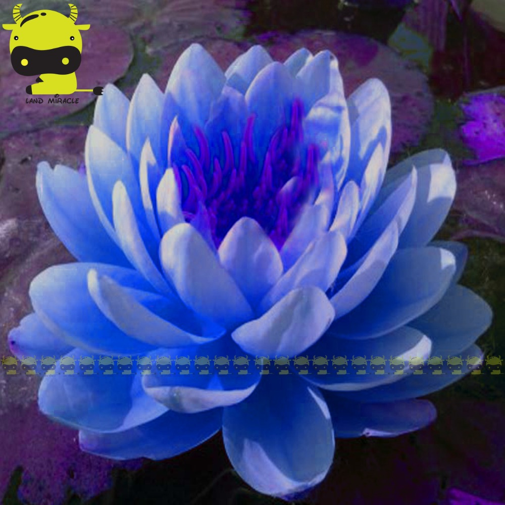 Different types of lotus flowers choice image flower decoration ideas different types of lotus flowers choice image flower decoration ideas different types of lotus flowers image mightylinksfo