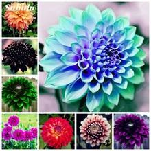 100 Pcs Charming Dahlia Flower Seeds Bonsai Bright Mixed Dahlia Flowers Peony Home Garden Decor Potted Plants