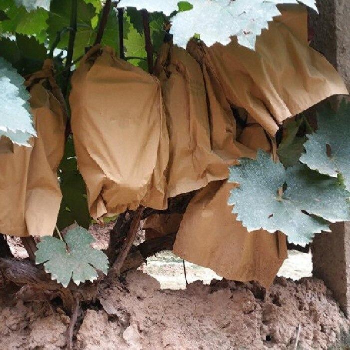 100 шт. Двойной слой водонепроницаемый фрукты защита мешки яблоко персик сумка яблоко апельсин киви выращивание мешки насекомое птица профилактика