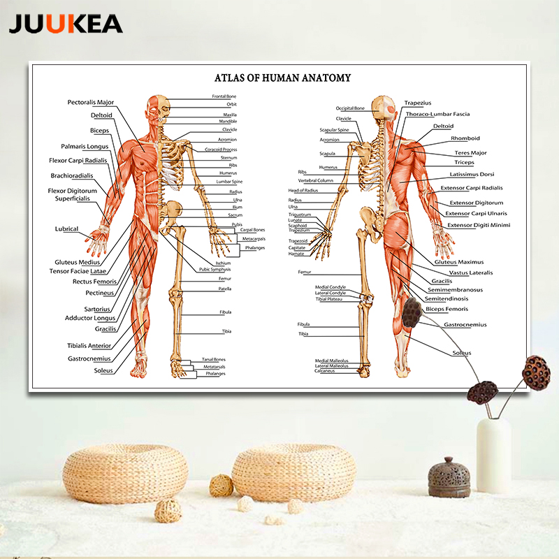 HD Atlas Human Anatomy Musculoskeletal Body Modern Science Canvas Print Painting Wall Picture For