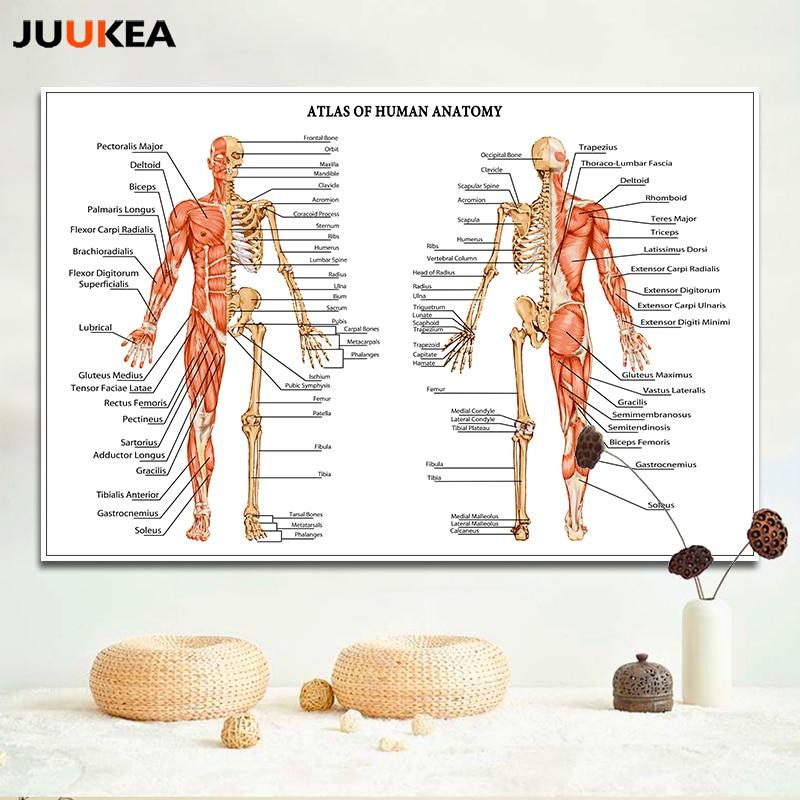 J0867 humano Cuerpo estructura anatomía Chart pop 14x21 24x36 ...