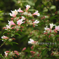 flower plant real locationplant 200g / Pack