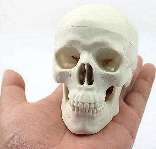 Dental lab globo Mini niños humano anatomía modelo anatomía cabeza ...