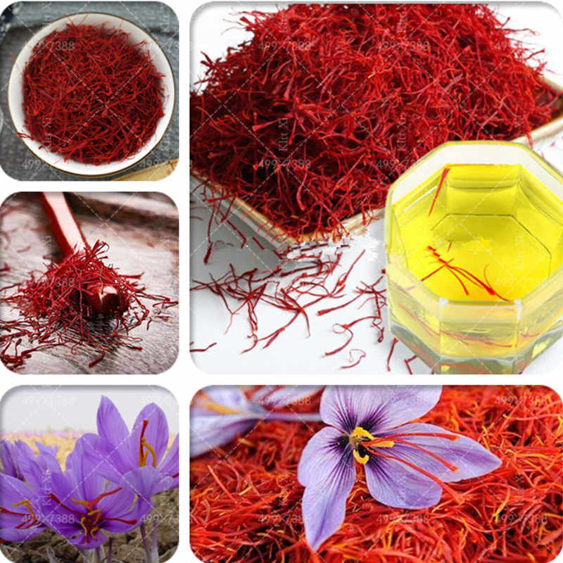 New! 500 Pcs Imported Saffron Bonsai, Not Crocus Saffron Bulb, Iran Saffron, Happy Joy Flowers, Indoor Bonsai DIY Home Garden