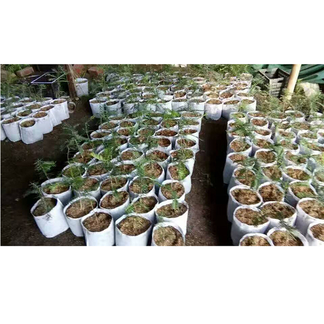 100pcs Biodegradable Non-woven Seedling Bag Graft Tree Grow Bag Grape Cuttings Planting Container Bonsai Flower Nourishing Bag
