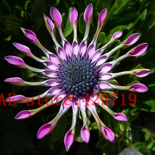 online buy wholesale exotic blue flowers from china exotic blue, Natural flower