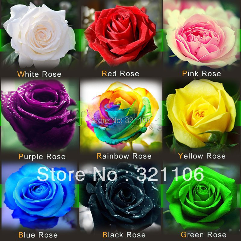 Rainbow Rose ,Black Rose  ,Blue Rose etc. 9 Colors DIY Home Gardening Balcony & Yard  Fragrant Flower Plant Bonsai Decoration