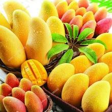 Free Shipping 2 Pcs/bag Miracle Fruit Seeds Giant Mango Bonsai Seed Fruit Tree Plant Plants For Garden Diy Home Pot Planter Gift
