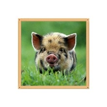 Omni-directional / round diamond 5D DIY painting pig embroidery cross-stitch home decoration gifts