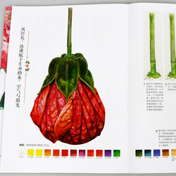New 21style Flowers plants book Grundkurs Aquarellmalerei Watercolor painting tutorial art drawing books for Adults