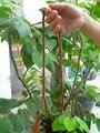 Free shipping 3pc/lot islamic natural wood 99 prayer beads muslim  tasbih Islamic Rosary