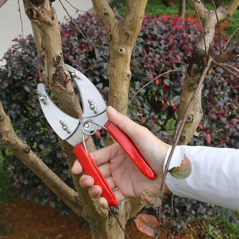 New Best Selling Fruit Tree Garden Professional Peeler Pruning Scissors With Peeling Ring Segmentation Tool Gardening Scissors in Pruning Tools from Tools