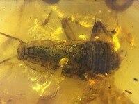 Большой (12 мм) редкие странно таракан личинка burmite Мьянма Amber насекомых 100 миллионов лет lynx камень из динозавров возраст мелового