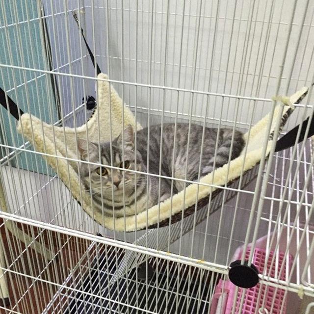 Polk Dot Polyester Pet Rat Rabbit Chinchilla/Cat Cage Hammock Small Dog Puppy Bed Cover Bag Gatos