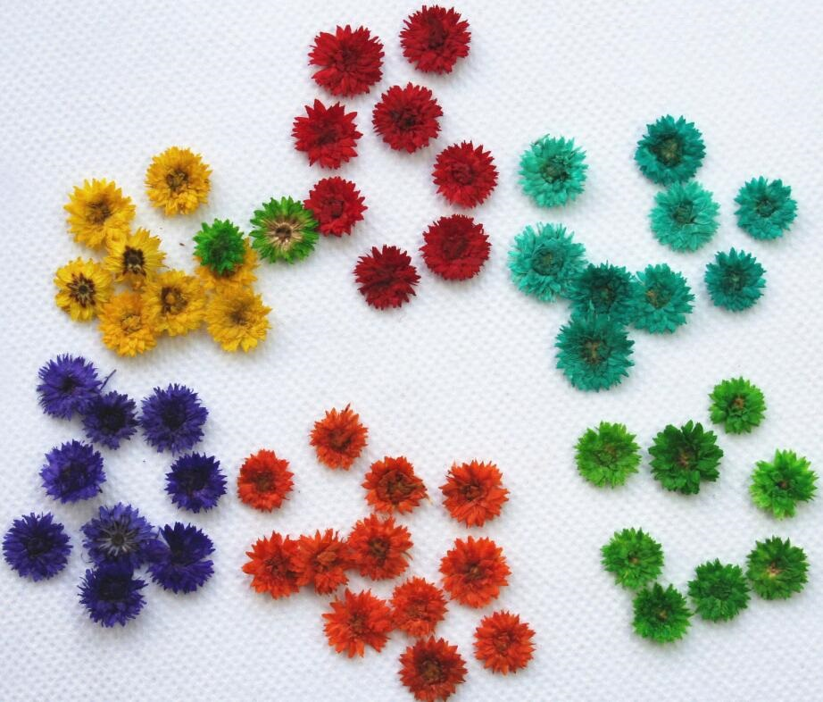 22x Real Pressed Daisy Pansy Flower Embellishment Scrapbook Phone Case Craft