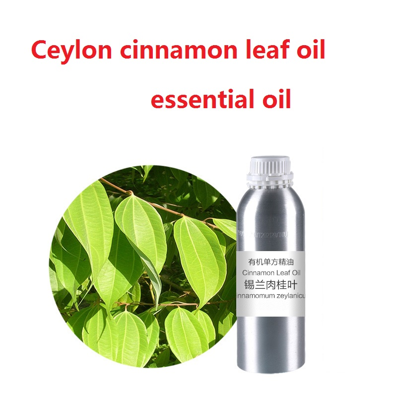 Cosmetics Zedoary Ceylon cinnamon leaf Essential base oil, organic cold pressed vegetable plant oil free shipping skin care 500g natural organic moringa leaf pow der green pow der 80 mesh free shipping