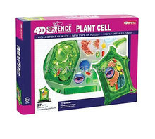 4 D Master plant cell anatomical Skeleton Model for sale dimensional toy anatomical model Medical Science education equipment
