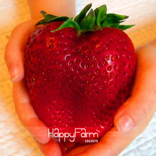 Best-Selling!Rarest Heirloom Super Giant Japan Red Strawberry Organic Seeds, 100 Pcs/Pack, Sweet Juicy Fruit,#WBBSRZ(China)