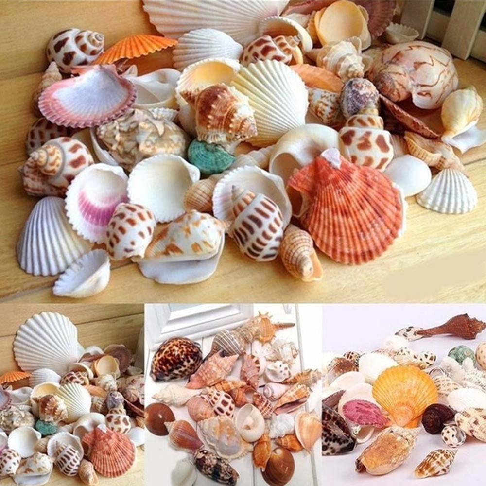 100g/Bag Mediterranean Style DIY Fashion Beach Mixed Seashells Mix Sea Shells Natural Crafts For Aquarium Fish Tank Decor
