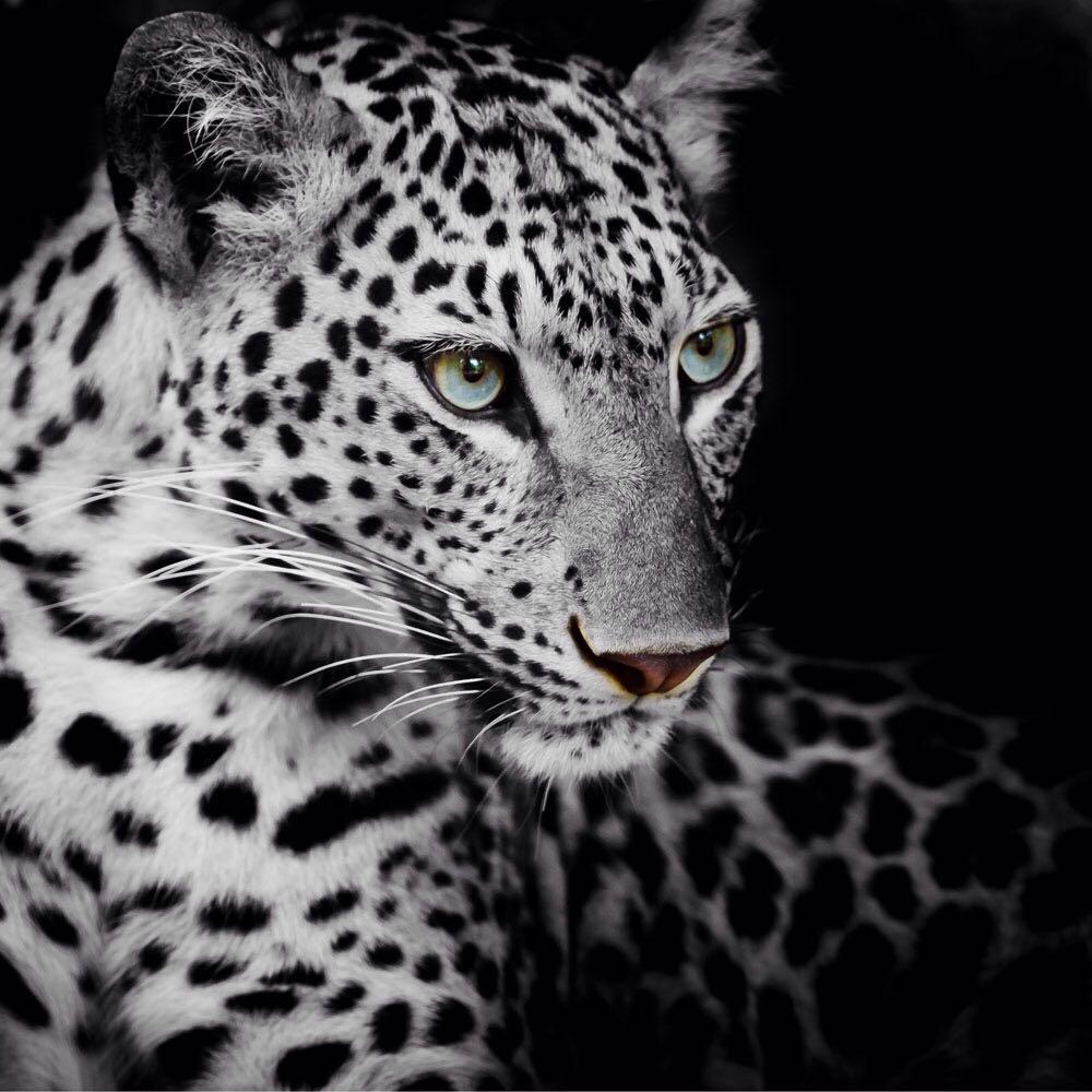 Tiger Latar Belakang Gambar Lukisan Dinding Rumah Seni Tas Anyaman Kulit Asli Chameo Couture Finn Brown Cokelat Tua Us 2160 4 Pcs Modern Dekorasi Kuda Dan Gadis O