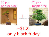 $1.22 get 30 japanese bonsai pine tree seeds and 20 japanese maple tree seeds  mini bonsai as gift for  black friday
