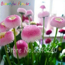 50 Pcs/Bag Real Rainbow Strawberry Ice Cream Little Daisy Seeds, New Arrival DIY Bonsai Plants Seeds For Home & Garden