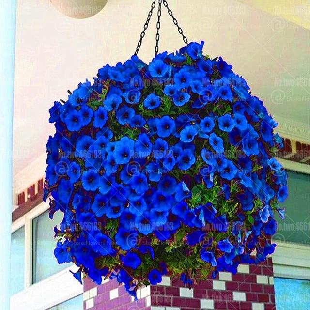200 шт. бонсай висит цветок петунии растений Редкие синий цветок петунии бонсай многолетний цветения растения в горшках для дома и сада