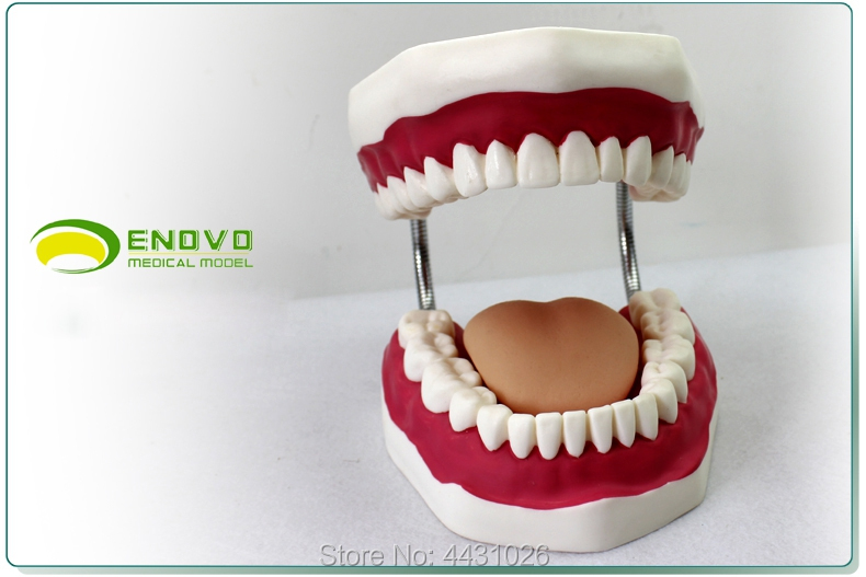 ENOVO The oral care model of oral cavity is used to guide dental model oral health teaching цены онлайн