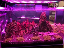 LED Grow Lights DC12V Full Spectrum Dimmable 40 to 90cm tank Growing aquarium light with Remote control and Adapter
