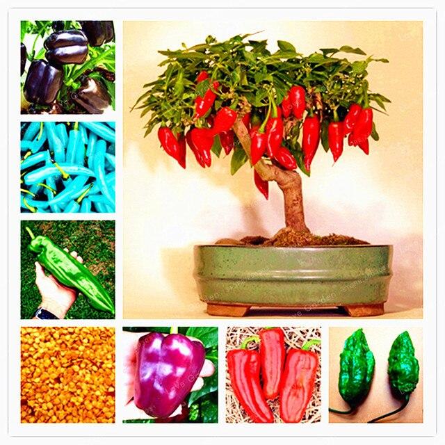 100 Pcs Chilli Seeds Vegetable Diy Potted Plants Indoor Outdoor Paprika For  Home Garden Seeds Germination