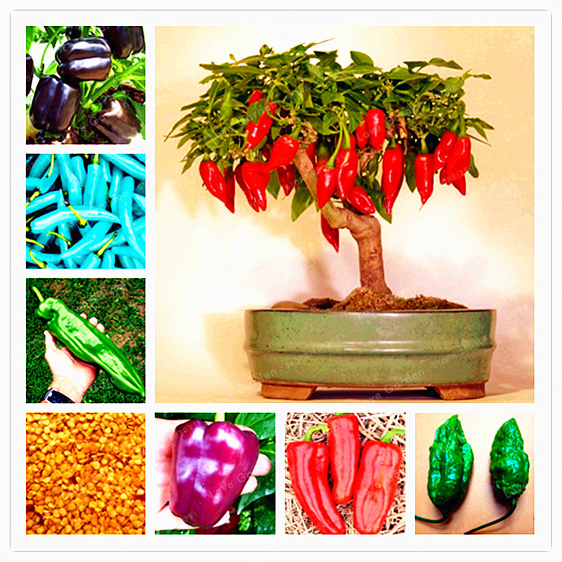 100 Pcs Chilli Seeds Vegetable Diy Potted Plants Indoor Outdoor Paprika For Home Garden  ...